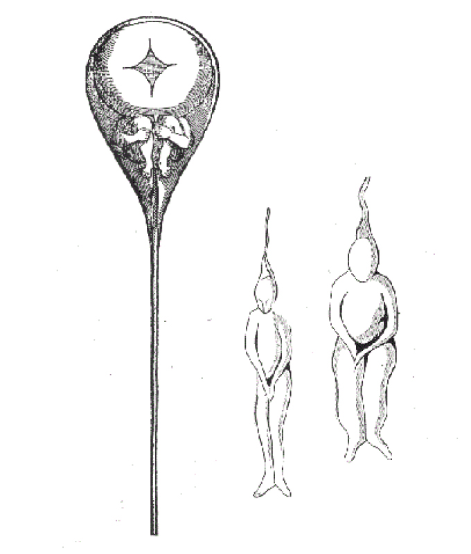 black and white illustration of humans growing inside a sperm